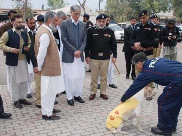 13 of k p police s imported sniffer dogs die in just two years