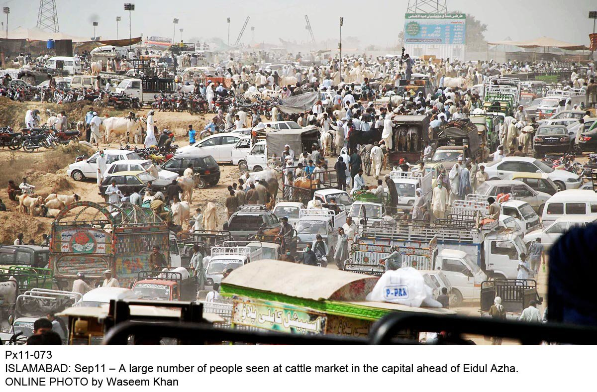 shc stays auction of three sites for cattle markets