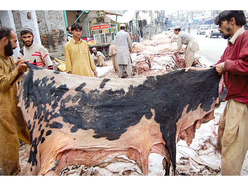 skin prices of animals hit rock bottom