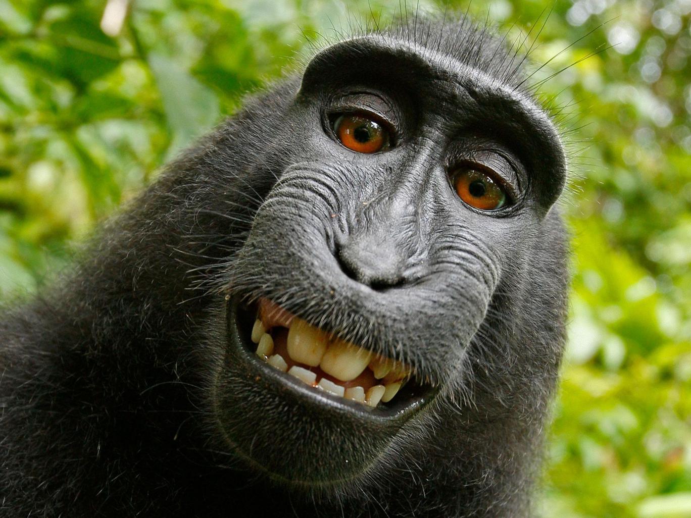 monkey selfie case photographer wins two year legal fight against peta