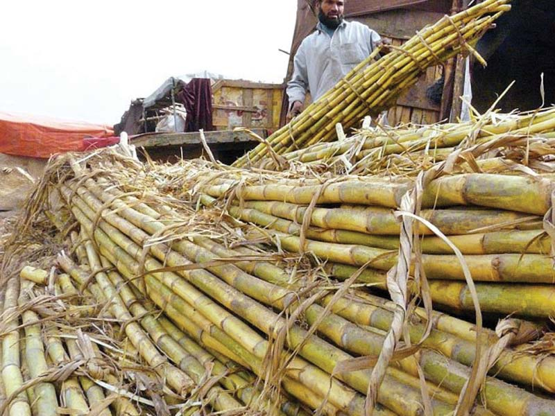 sca urges sindh govt to settle issues of cane crushing pricing