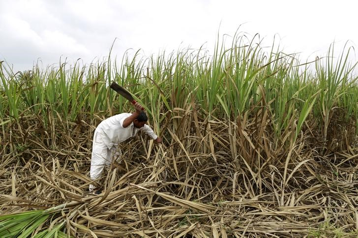 sindh assembly opposition protests for not being allowed to speak on sugar cane crushing