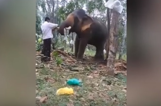 viral video shows man trying to pull off baahubali facing elephant s wrath