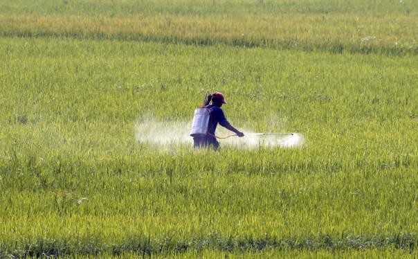 study reveals use of toxic pesticides across punjab