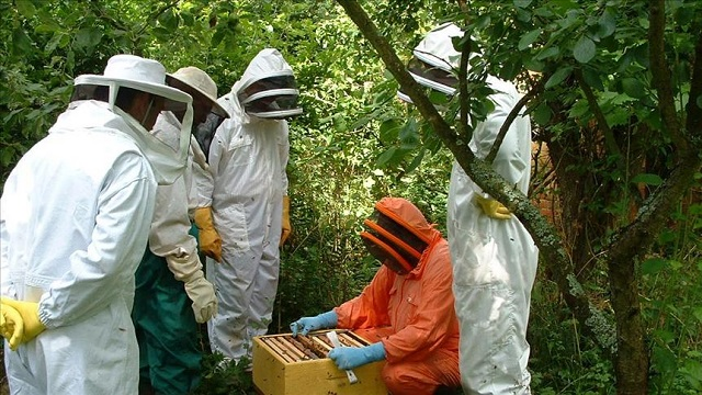tika also helped beekeepers in other countries including kenya palestine and bosnia photo anadolu post