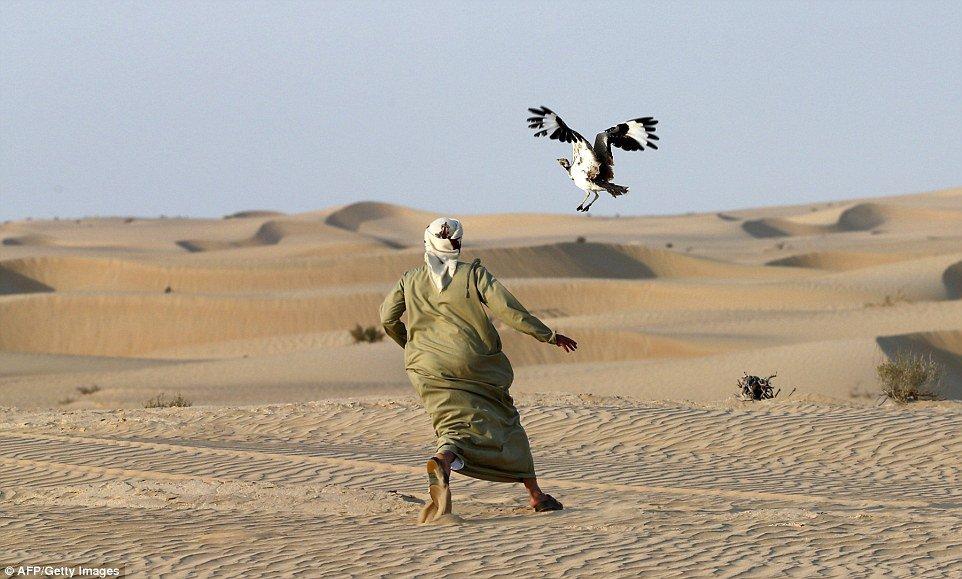 A man hunting the houbara bustard. PHOTO: AFP