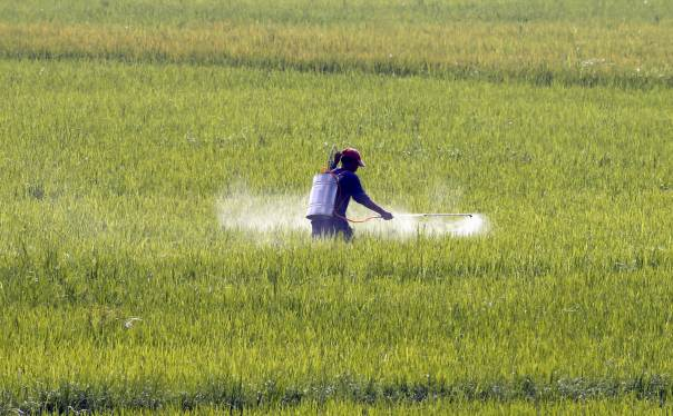 provinces oppose additional urea export but ministry unmoved