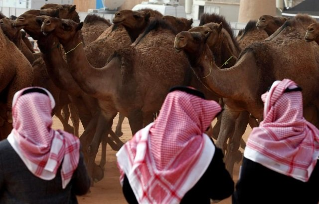 saudi men stand next to camels as they participate in king abdulaziz camel festival in rimah governorate north east of riyadh saudi arabia january 19 2018 picture taken january 19 2018 photo reuters