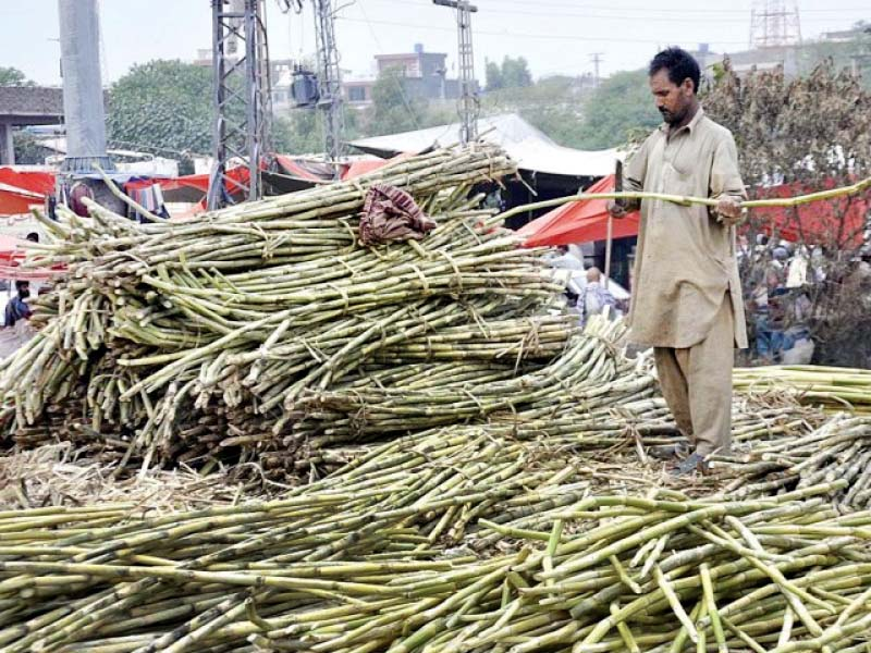 sugarcane farmers get bitter end of the deal