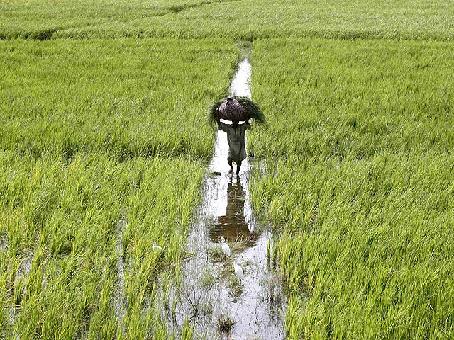 agriculture punjab prioritises farmer friendly projects