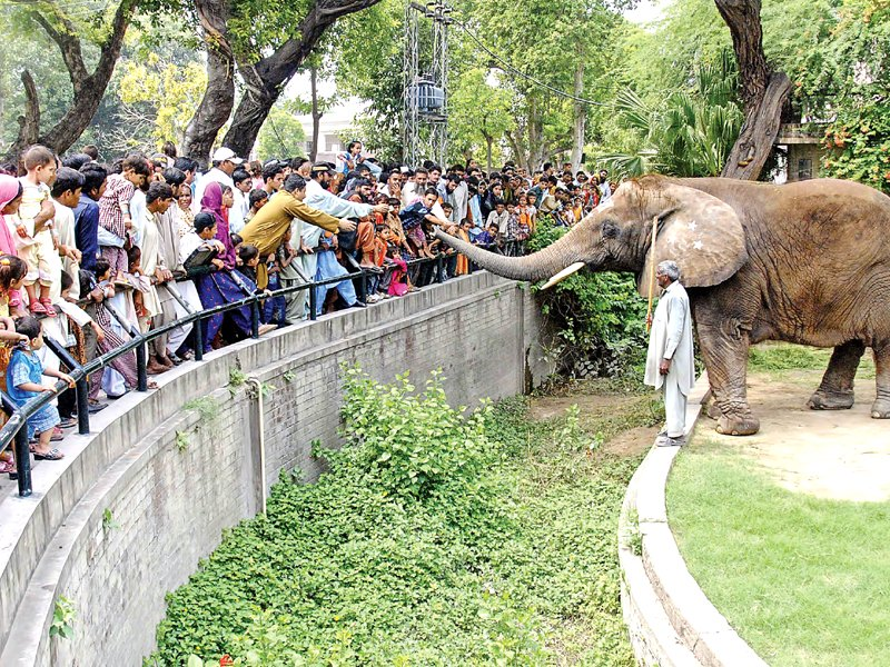 zoo safari project to start soon