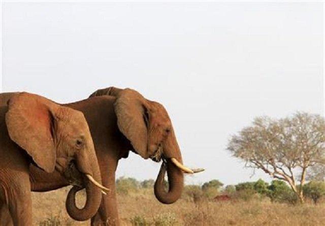 four elephants were killed photo reuters