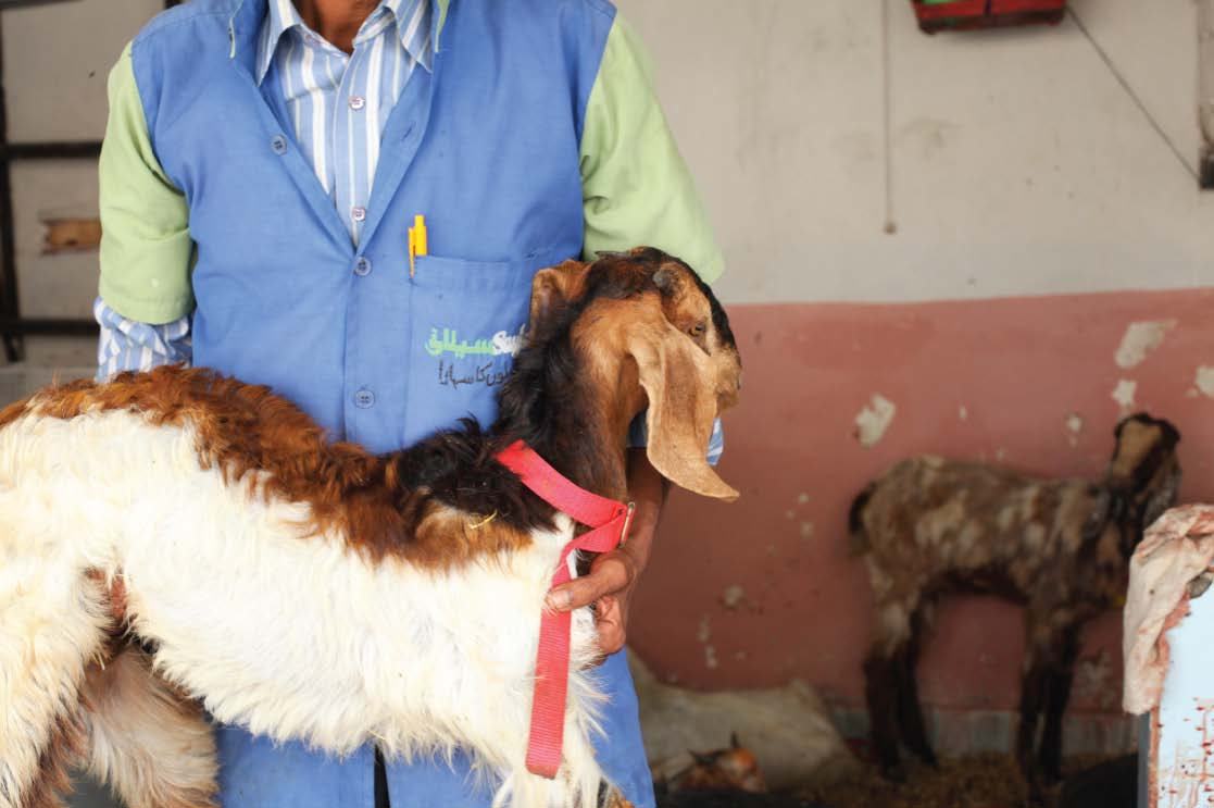 the saylani welfare trust slaughters up to 100 goats a day mutton is mostly used by the other charities as well photo nefer sehgal express