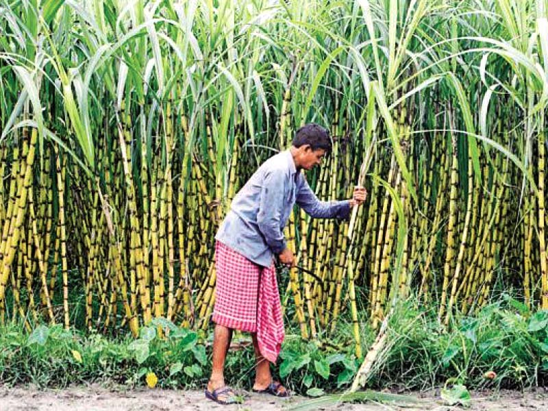 the summary came as a surprise for the cabinet members who noted that almost all key stakeholders had supported the mechanism that called for printing the sugarcane purchase price and quantity on the cash receipt photo reuters
