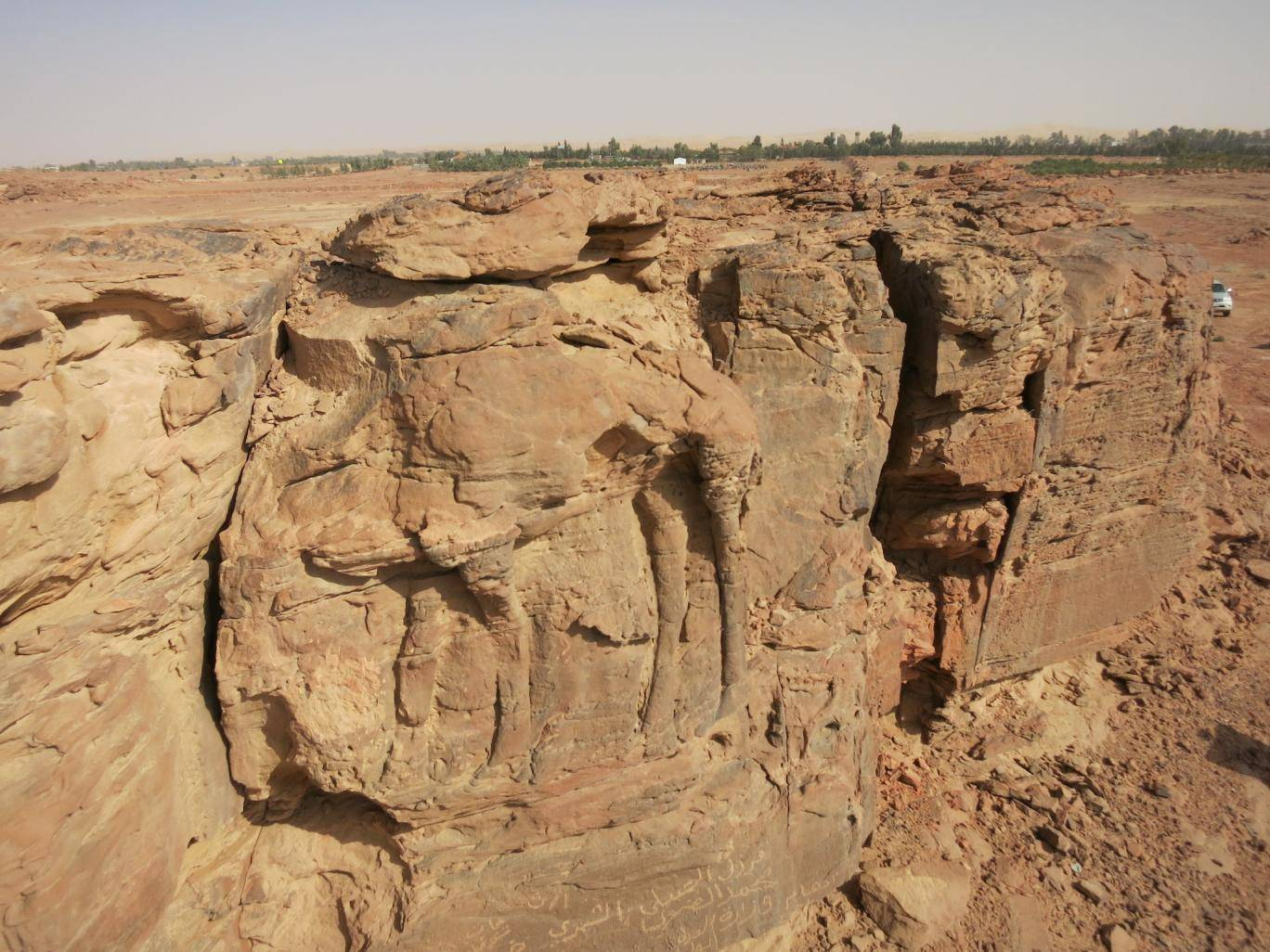high relief carving of a standing dromedary on sandstone spur photo courtesy cnrs