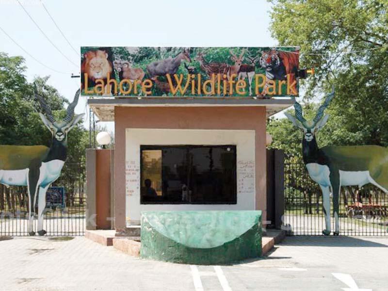 lahore zoo safari no longer a wildlife haven