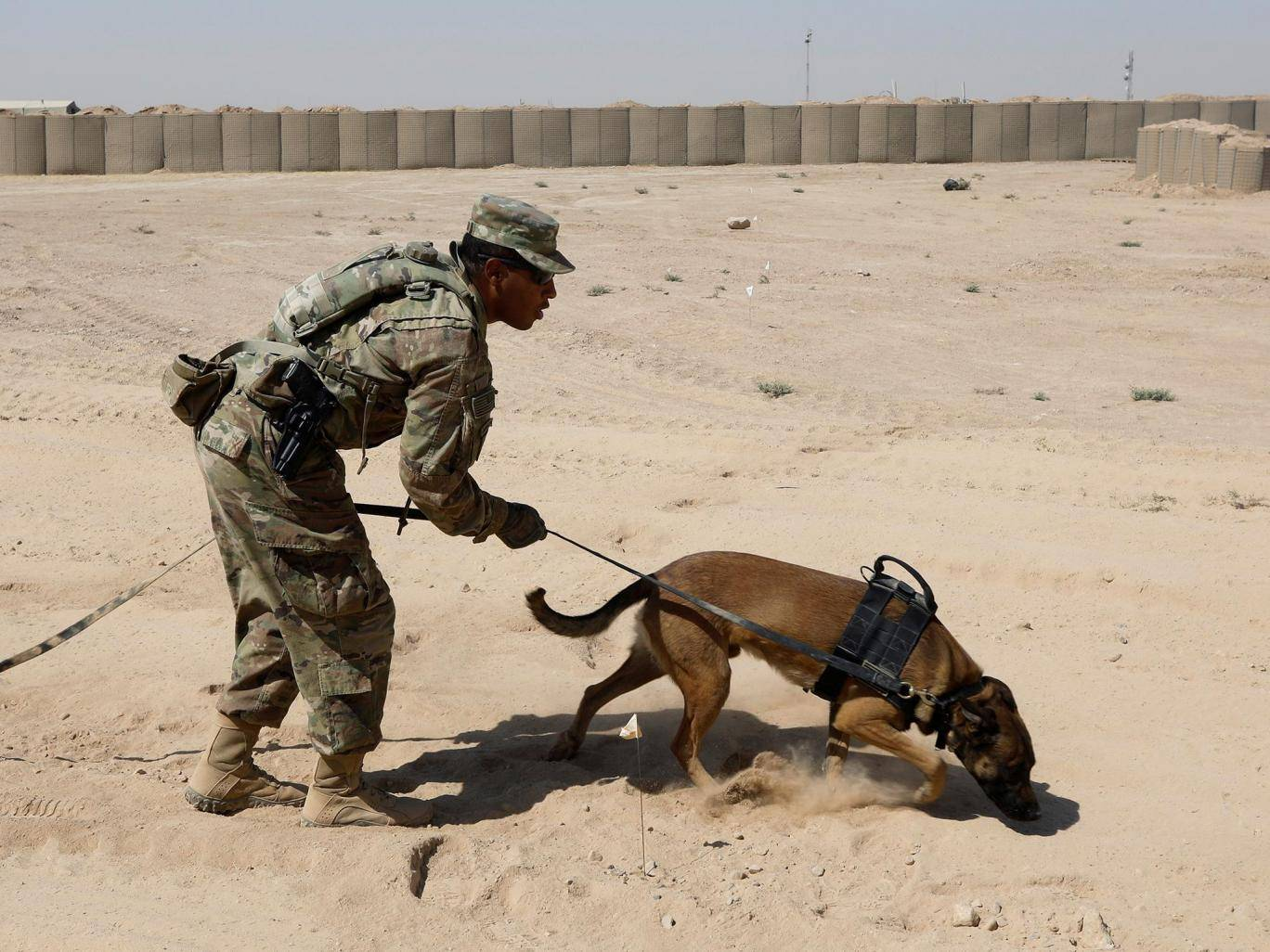 a us army dog undergoes training to detect explosive devices photo reuters file