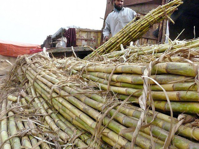 result of provinces apathy losses of sugarcane farmers top rs66b