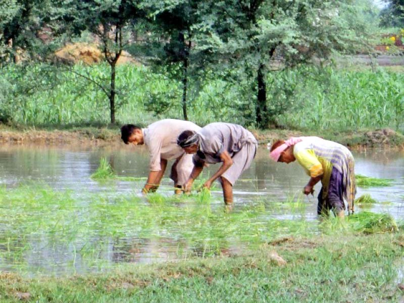 the meteorological department has predicted less rainfall in early kharif but normal showers during monsoon photo file