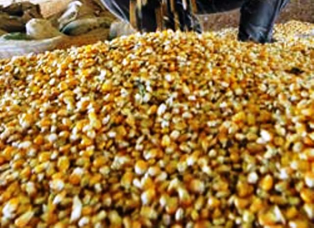 use of natural seeds for agriculture urged