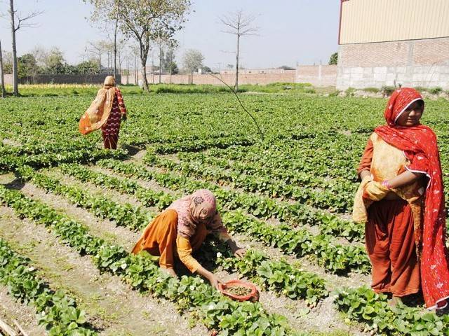 rs300m distributed among farmers
