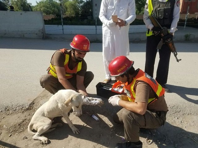 watch prompt action by rescue 1122 saves stray dog s life in peshawar