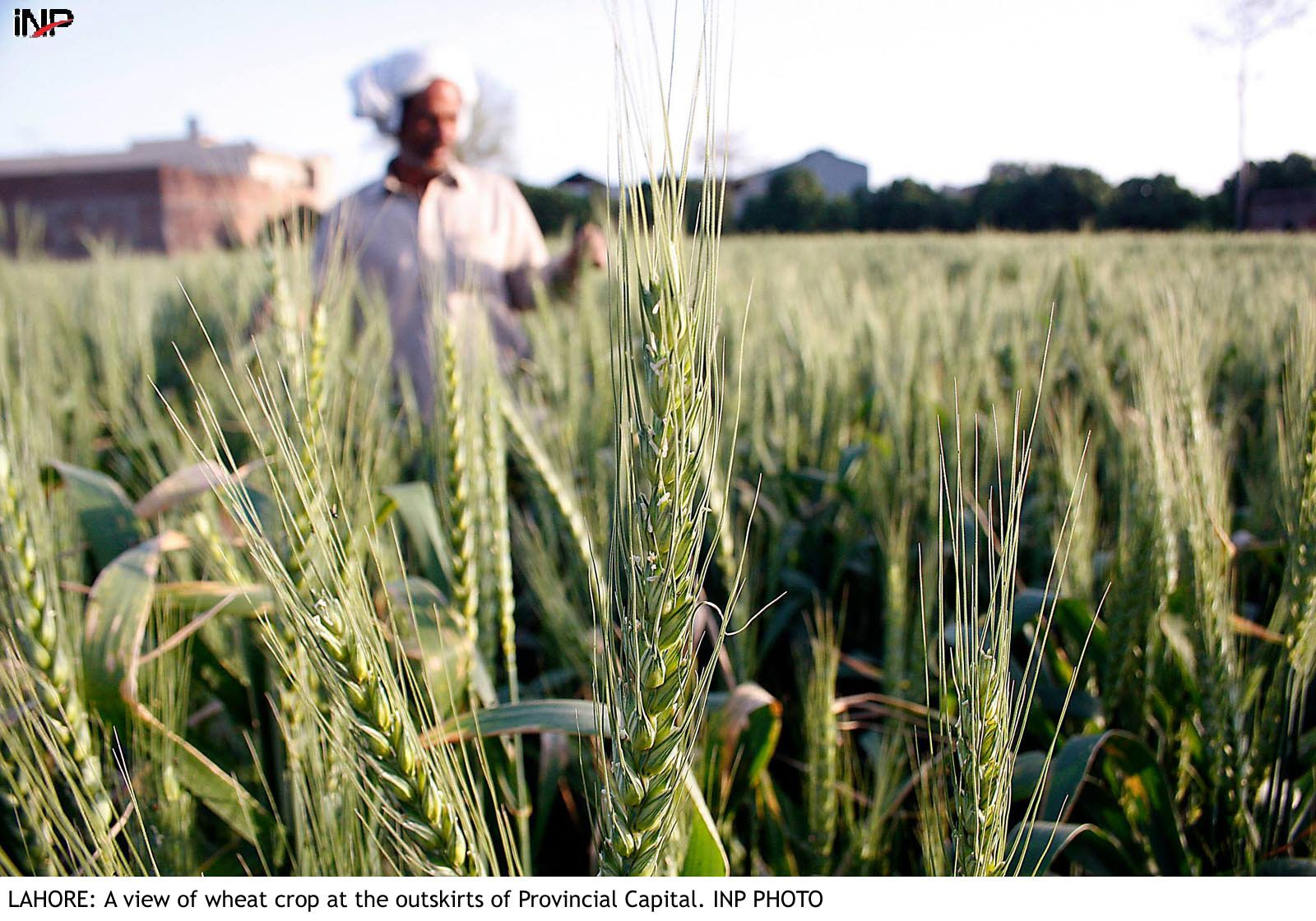 sindh to get a new and improved agriculture policy