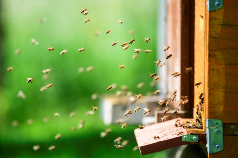 slovenia a land with beekeeping in its genes
