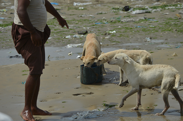 fishermen feed karachi s dog islands