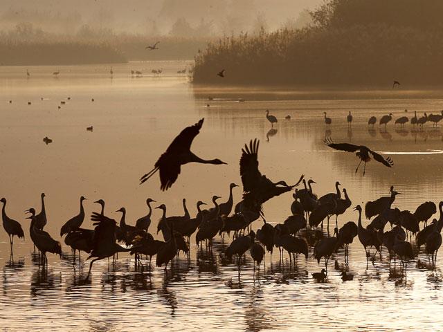 licensed hunters killing birds in droves across rahim yar khan