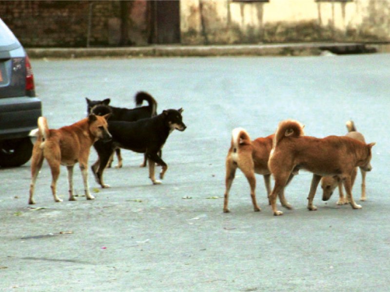 three injured by stray dogs in daska