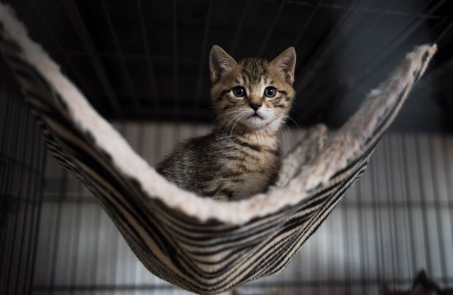 Court yet to decide case of kitten's death. PHOTO: AFP / FILE