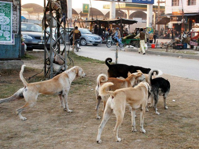 man injured by stray dogs