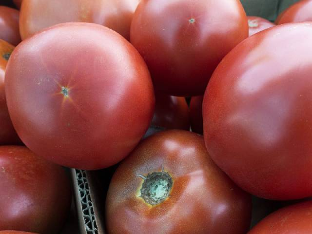 eid approaching tomato prices up by more than 150 per cent