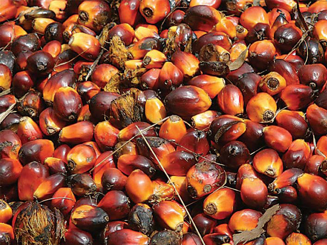 Indonesia to help Pakistan with palm oil production. PHOTO: FILE