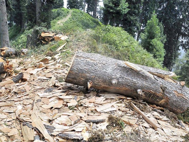 Between 2000 and 2010, Pakistan lost an average of approximately 43,000 hectares of forests (equivalent to half the size of Islamabad) every year. PHOTO: EXPRESS/FILE