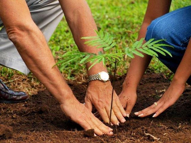 pakistan on track to meet 10b tree project