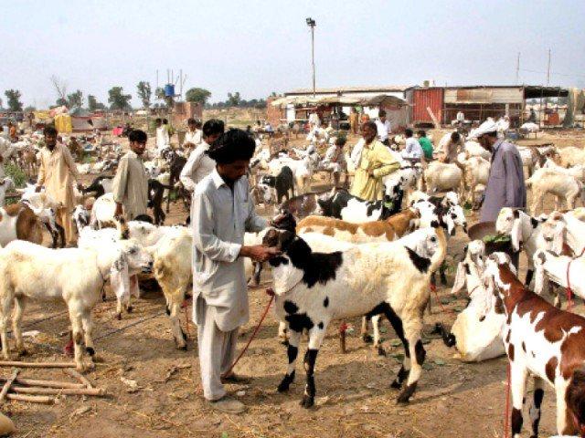 soaring animal prices keep buyers at bay
