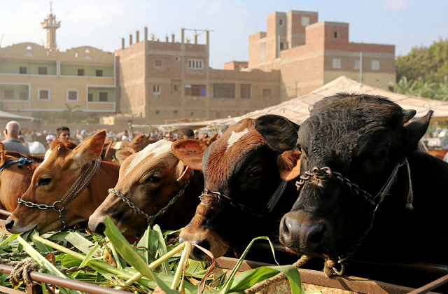 prices of sacrificial animals soar ahead of eid
