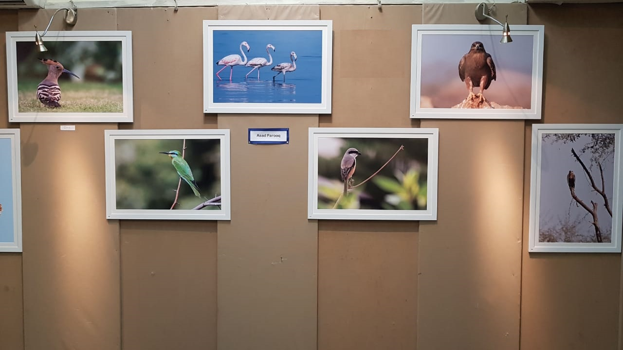 Photo exhibition at PACC features the works of 16 professional and amateur wildlife photographers coming from various walks of life - PHOTO: COURTESY HINA RIZVI