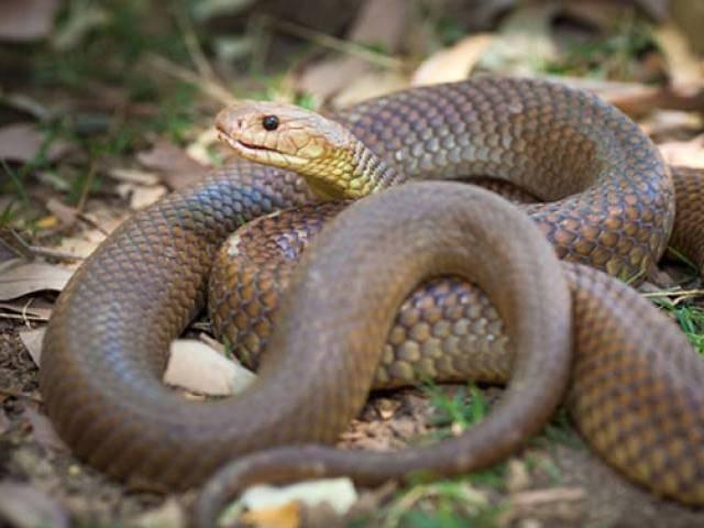 five bitten by venomous snakes