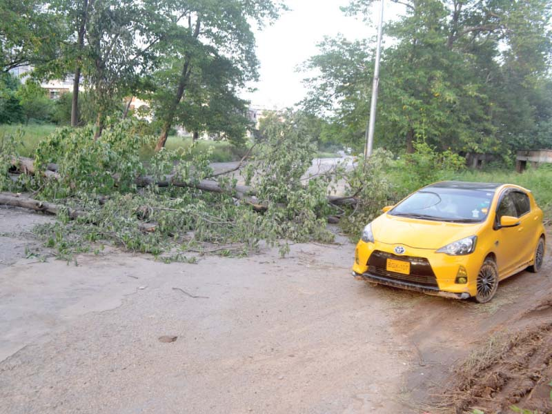 trees uprooted by storm yet to be cleared from roads
