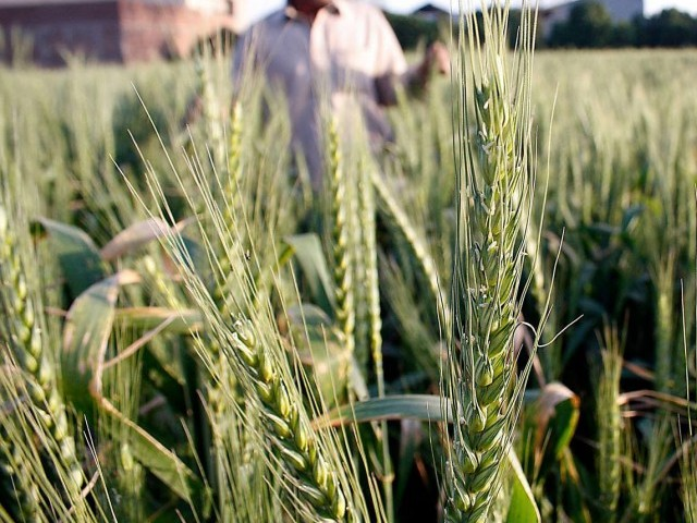 The meeting also decried delay on part of the sugar mills in payment of Rs4 billion arrears to cane growers.  PHOTO: INP/FILE