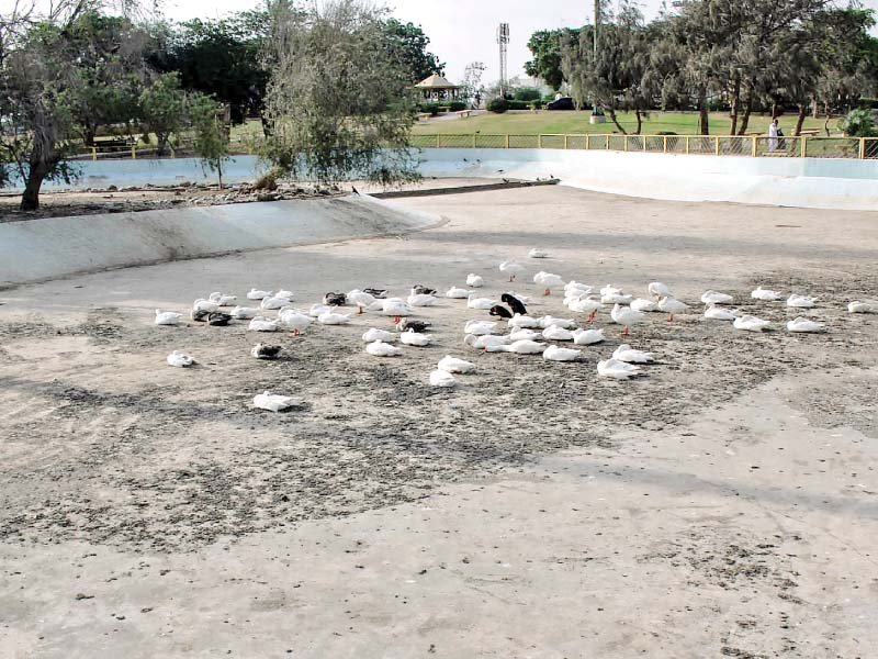 hill park s most popular attraction a lake in the centre has all but dried up due to the lethargy of the karachi metropolitan corporation leaving dehydrated and weary ducks to fend for themselves photos athar khan express