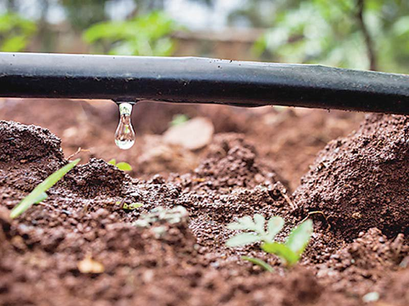 drip irrigation most suitable for gram cultivation