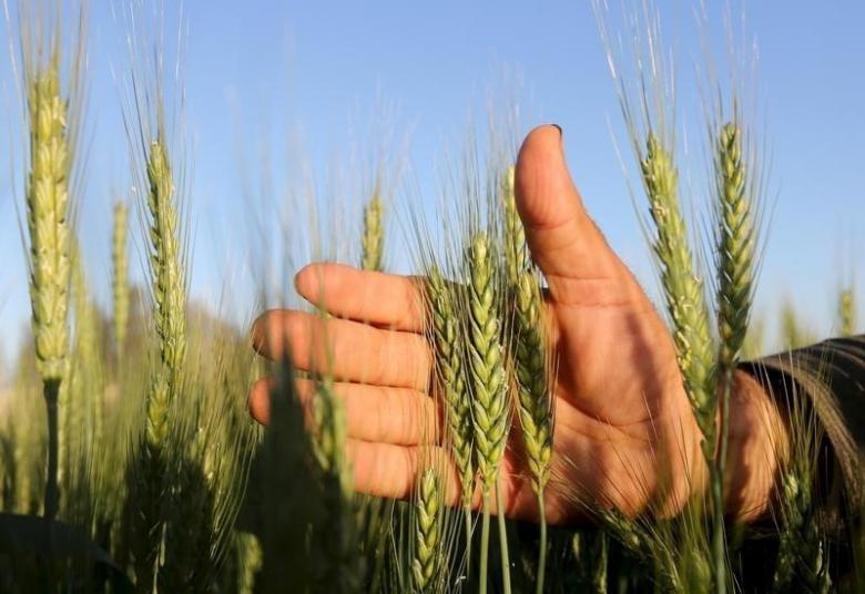 pti govt likely to increase wheat support price