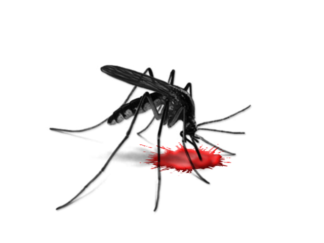 stock image of a mosquito photo stock image