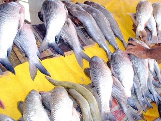 demand for fish rises as season begins in rahim yar khan