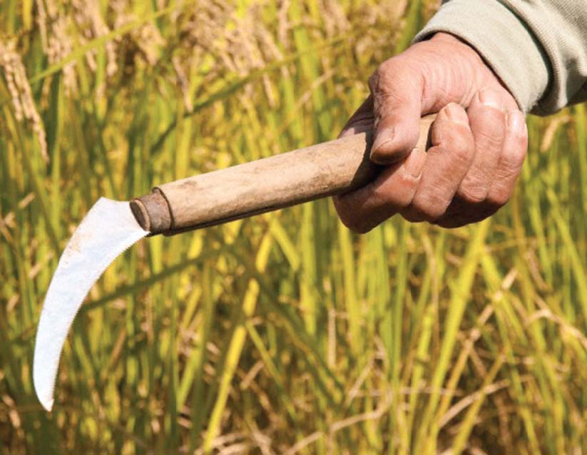 promoting agriculture punjab govt vows to facilitate small farmers