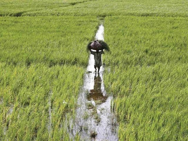farmers demand punjab return sindh s stolen water